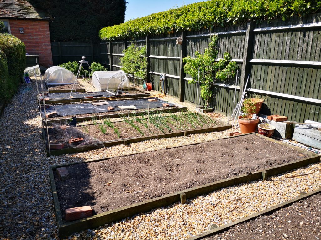 Vegetable garden layout picture