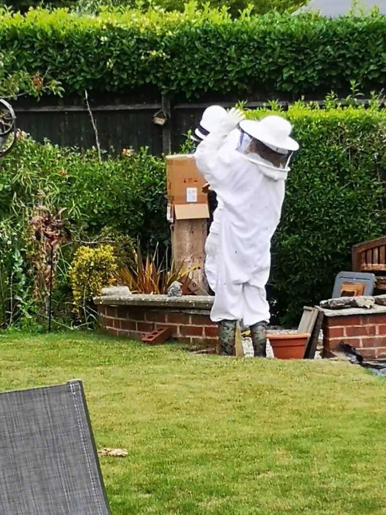 Friendly local beekeepers transferring the swarm to my hive